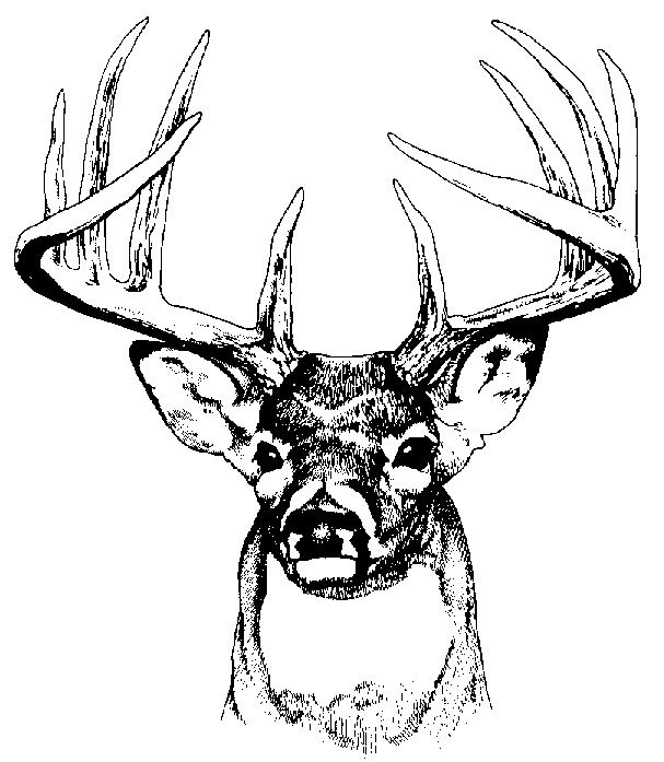 deer clip art google search painted wood pinterest whitetail rh pinterest com Deer SVG Deer Hunting Clip Art
