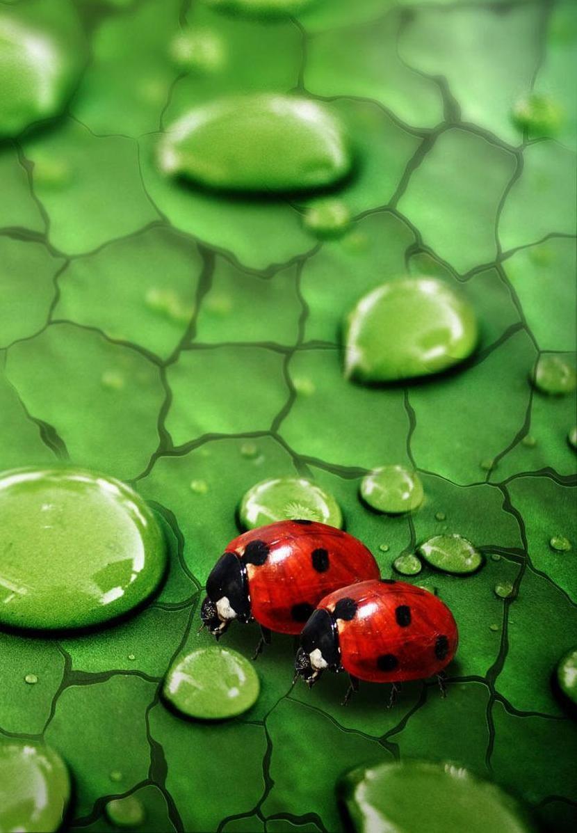 Пин от пользователя Люда Snow на доске насекомые*insects ...