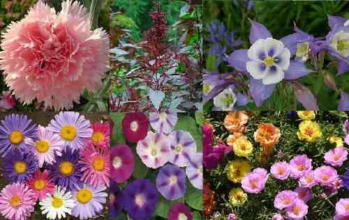 Kit Sementes Jardineira I. São 6 Tipos De Flores 60 Sementes - R$ 14,99