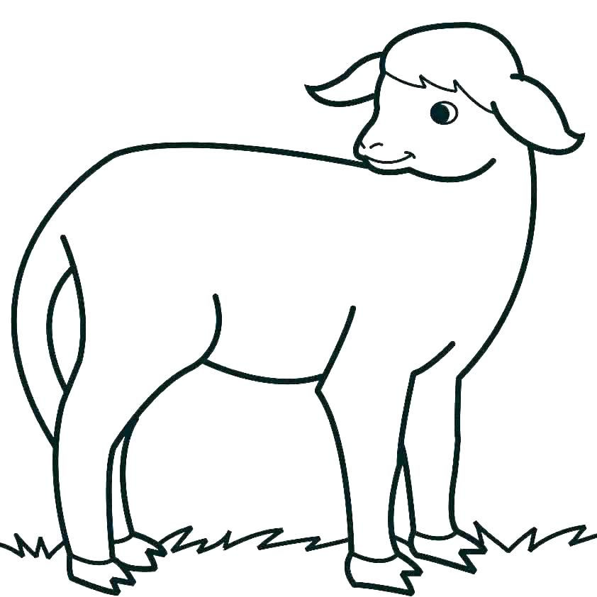 Sheep Color Page Sheep Coloring Sheets Printable Page Of A