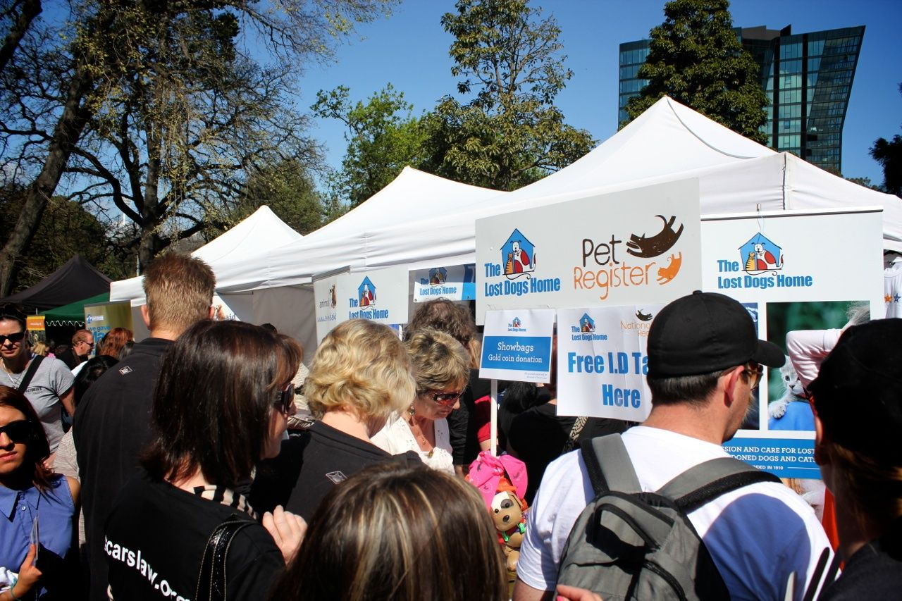 Oscar S Law Supports Around The Lost Dogs Home And National Pet Register Tent 2011 Http Dogshome Com Oscars Law Losing A Dog Puppies Animal Companions