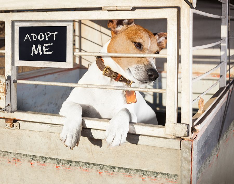 October Is Adopt A Shelter Dog Month Ways Pets Make Life Better Shelter Dogs Shelter Dogs