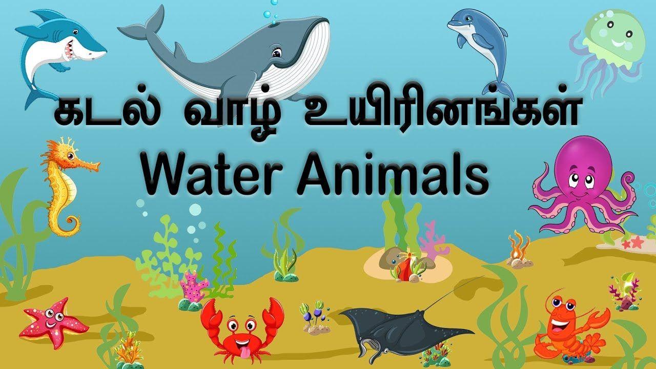 WATER ANIMALS நீர் விலங்குகள் கடல் வாழ் உயிரினங்கள்