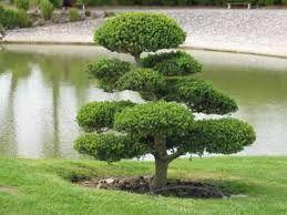 Resultat De Recherche D Images Pour Jardin Japonais Jardineria