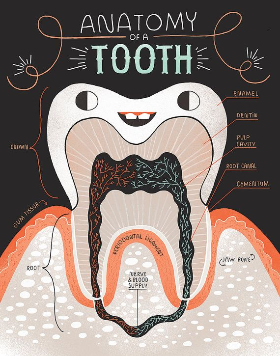 Anatomy of a Good Tooth and Bad Tooth: Two Art print Set | Teeth are ...