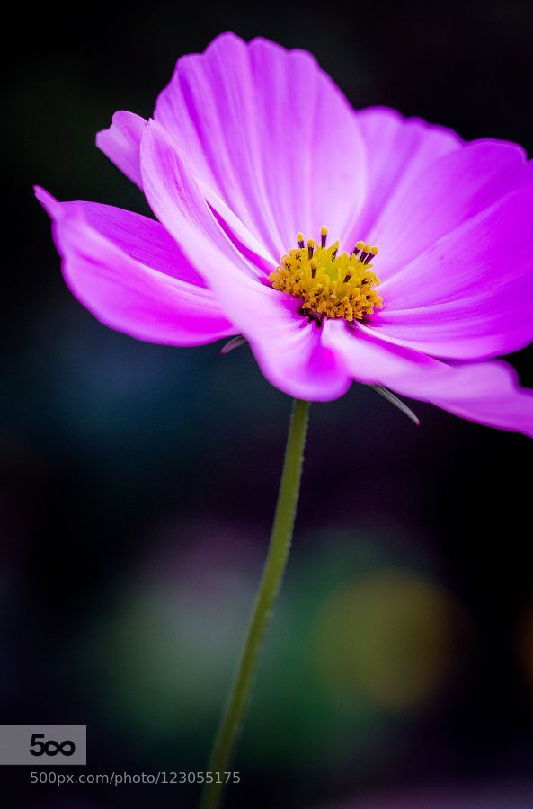 Floral magic by edithnero. Please Like http://fb.me/go4photos and Follow @go4fotos Thank You. :-)