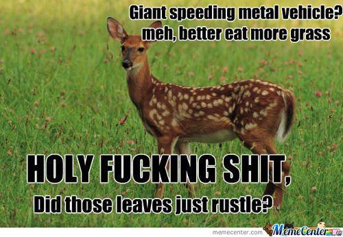 d11b700f408299984e38db425b3b9b89 meme center largest creative humor community funny deer,Funny Deer Memes