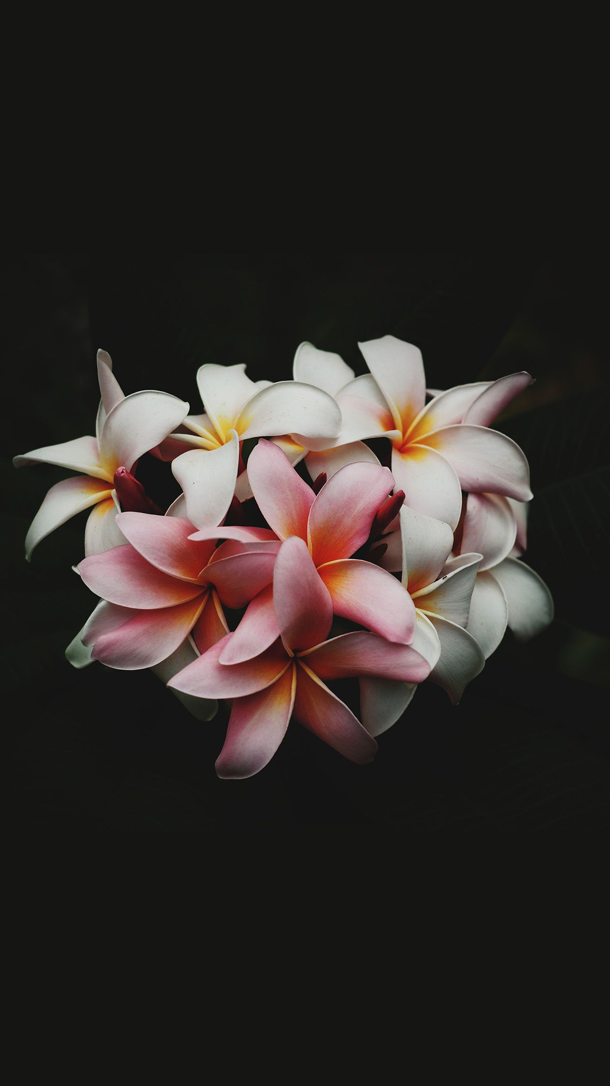 Dark Floral Iphone Wallpaper Floral Wallpaper Desktop Iphone