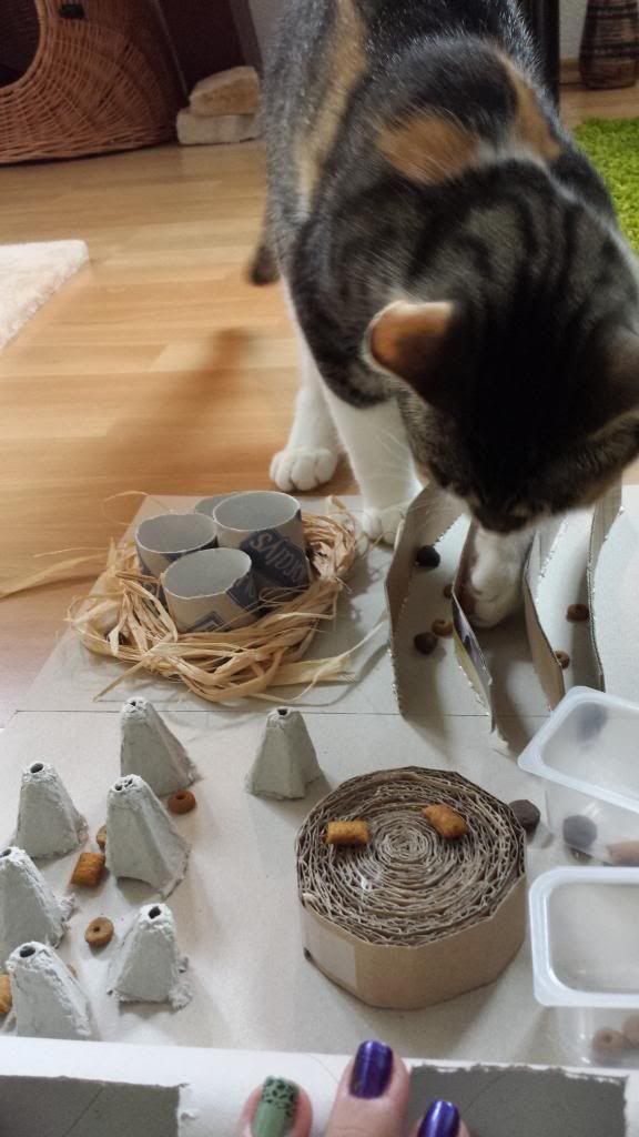 Zeigt Her Eure Fummelbretter Seite 20 Katzen Forum