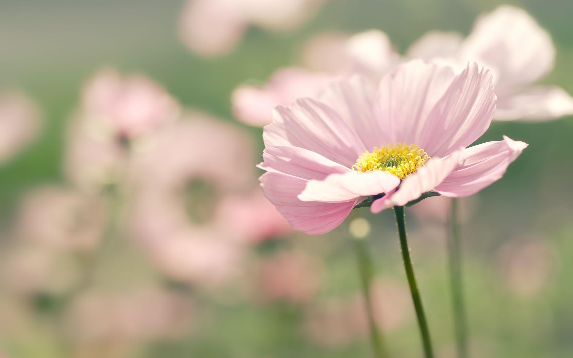 Обои размытость, цветы. Цветы foto 17