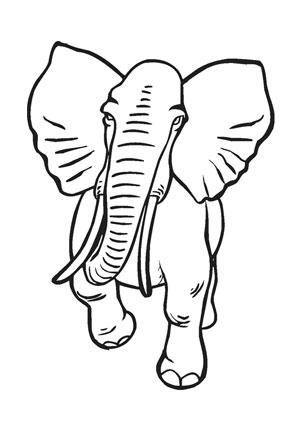 Ausmalbild Alter Afrikanischer Elefant Zum Ausmalen Ausmalbilder Ausmalbilderelefanten Malvorlagen Afrikanischer Elefant Ausmalen Elefant Ausmalbild
