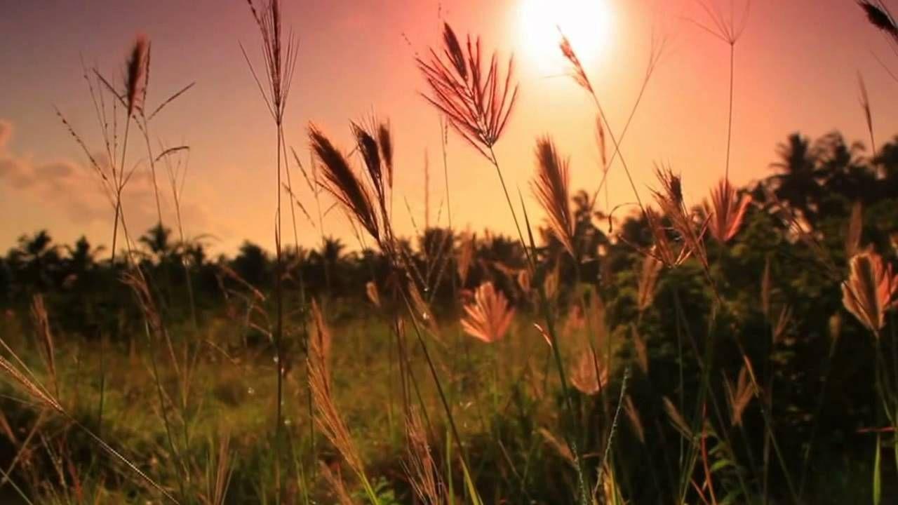Epingle Par Samir Sam Sur Think Faune Et Flore Biodiversite Flore