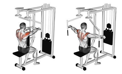 seated reverse fly  push workout fitness body upper