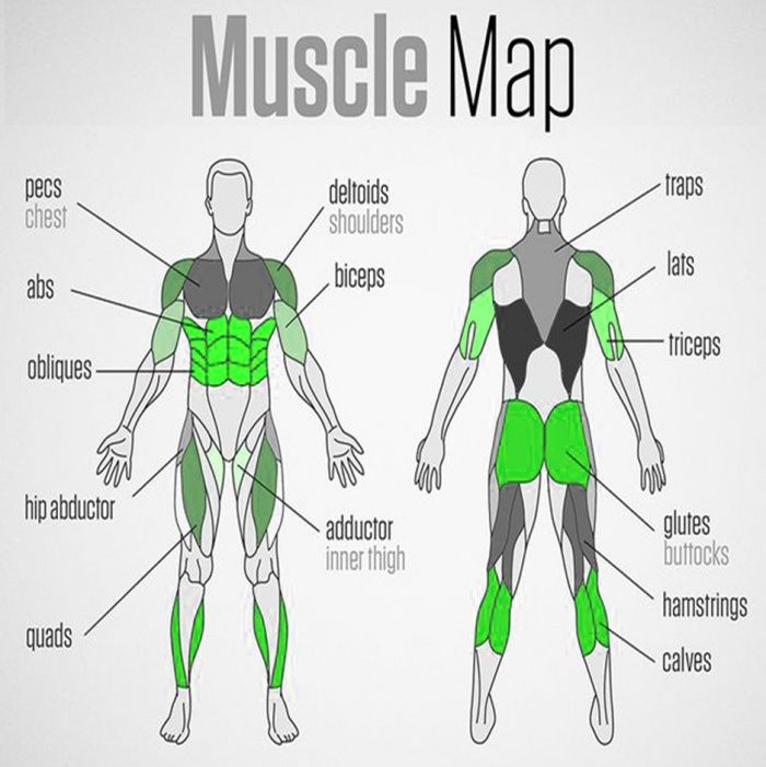 Full Body Muscle Map Healthy Fitness Trainings Plan Sixpack Ab Fitness Training Plan Fitness Motivation Inspiration Healthy Fitness