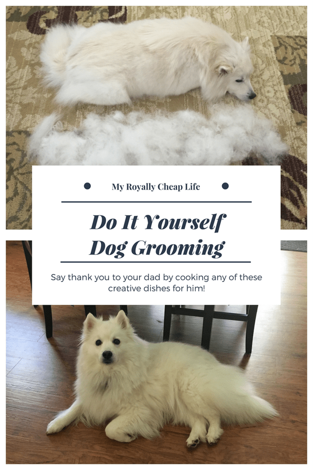 Diy Dog Grooming With Images Dog Grooming Cat Illnesses Sick