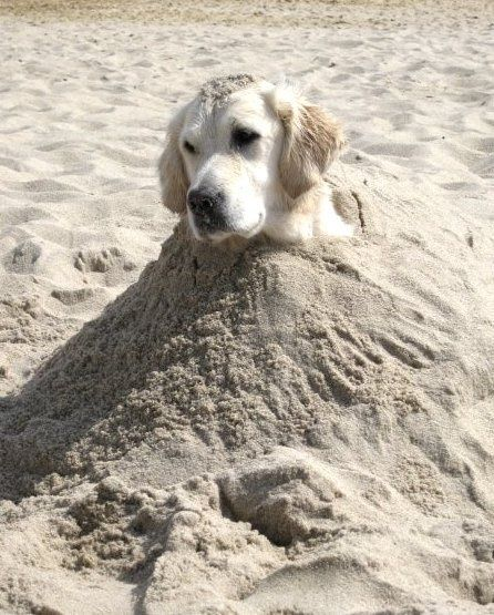 Even the pups don't always mind being buried in the sand for their (human) kids!