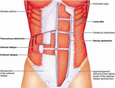 What's up with Diastasis Recti? By: Dr. Lindsay Mumma, DC, and Dr. Lindsey Mathews, D.C.   What is Diastasis Recti? Diastasis Recti (or DRA) is the separation of the linea alba, connective tissue, that connects each of your six-pack or…