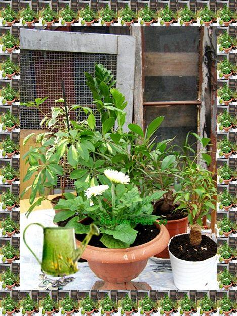 Kwiaty Doniczkowe W Moim Ogrodzie Babcia Radzi Cos Tam Plants