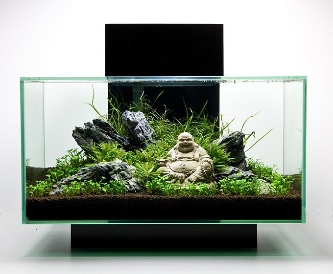 fluval edge aquascape google search aquarium. Black Bedroom Furniture Sets. Home Design Ideas