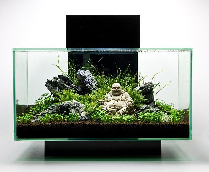 Pin Oleh Eiven Di Aquarium Aquascape Etc Ikan Akuarium Ide Berkebun Taman Air