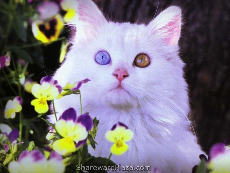 Free Cat Screensavers | 7art Miaow Cats ScreenSaver 1.1