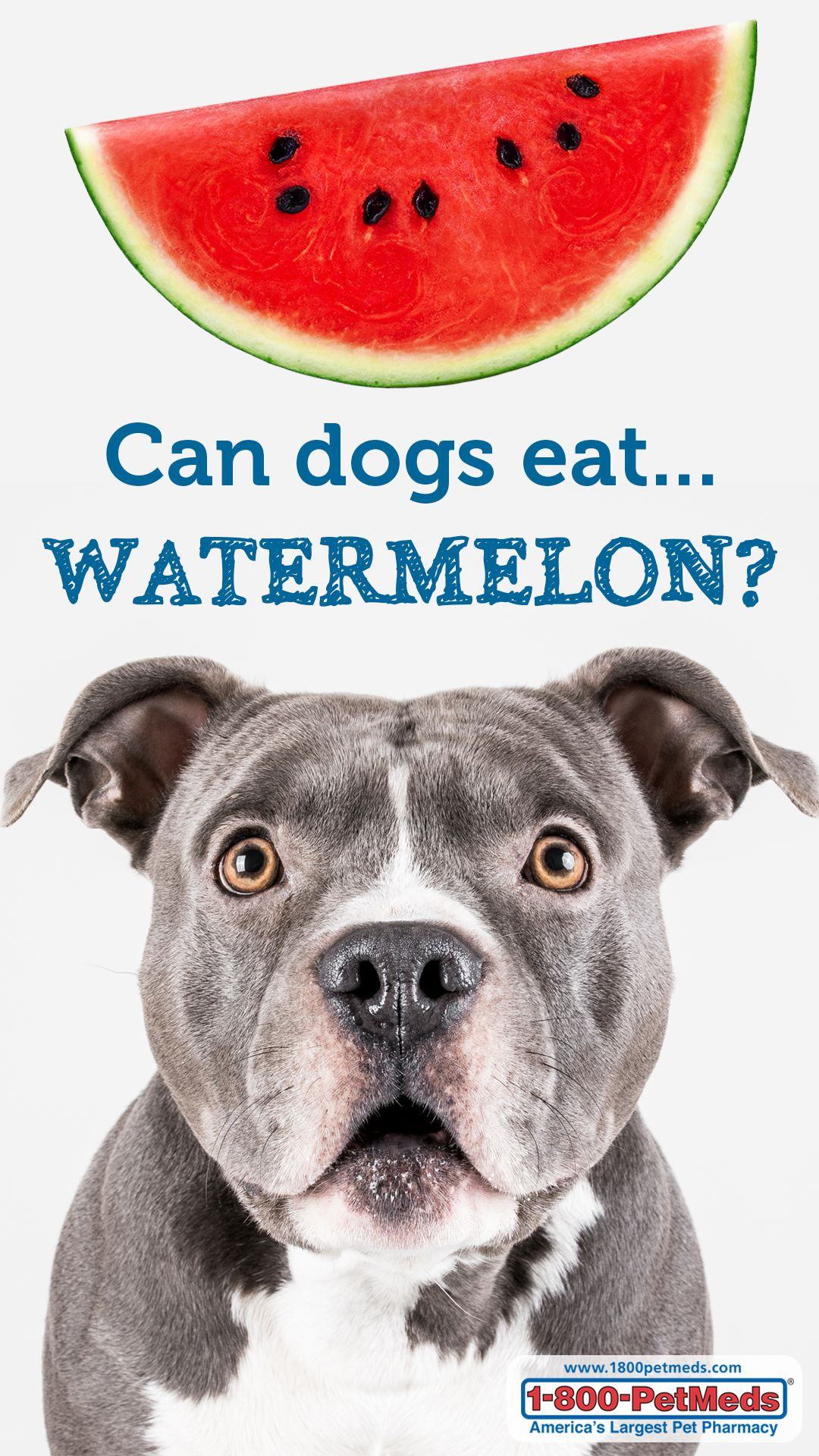Can Dogs Eat Watermelon? 1800PetMeds® Can dogs eat