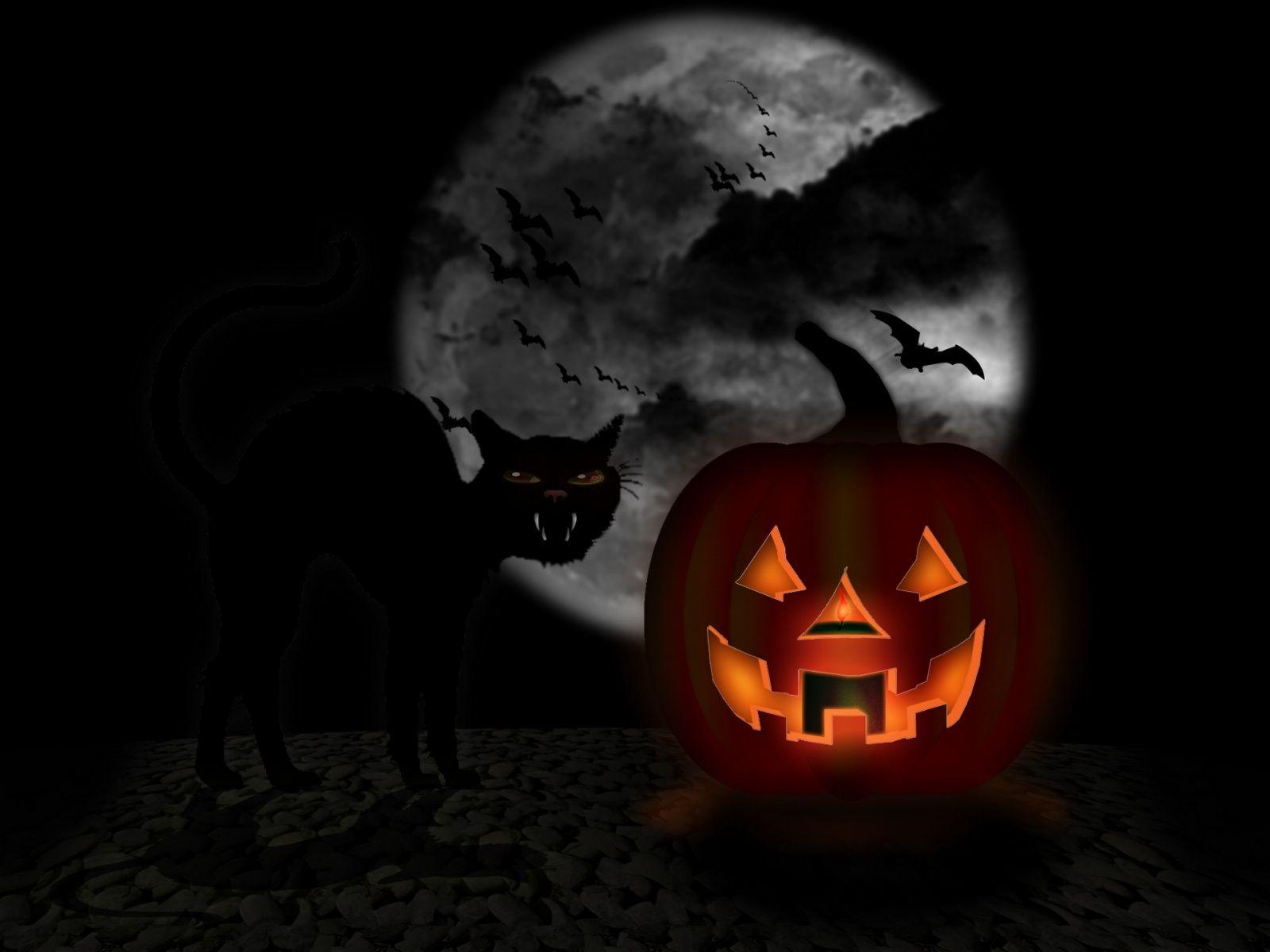 Black Cat Halloween Facebook Italia News E Gossip Dal Primo Blog