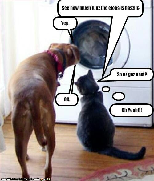The Cats Evil Plan 2 Trick The Dog Check Lol Dog Quotes Funny Cat Quotes Funny Cat Memes