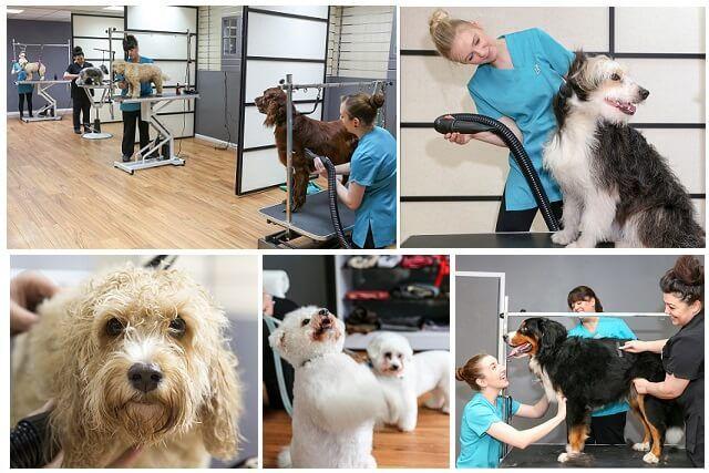 Looking For Best Dog Groomer In Surrey Uk Best Dog Groomer In