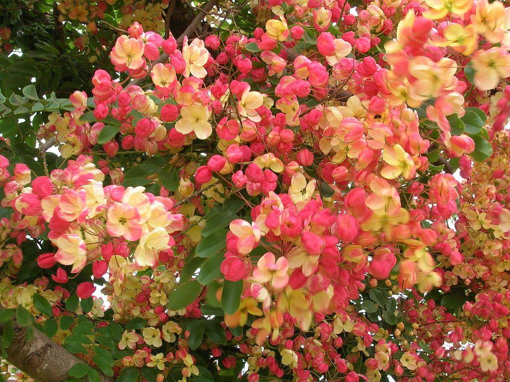 Tips to take hawaiian plants back to mainland rvores pinterest hawaii flowers izmirmasajfo