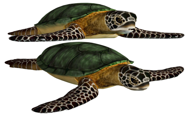 Green Turtle Cliparts Turtle Png Image And Clipart Turtle Sea Turtle Sea Turtle Shell