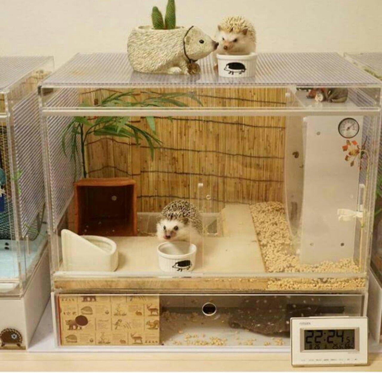 Facts about hedgehog pet pinterest hedgehog cage for Diy guinea pig cages for sale