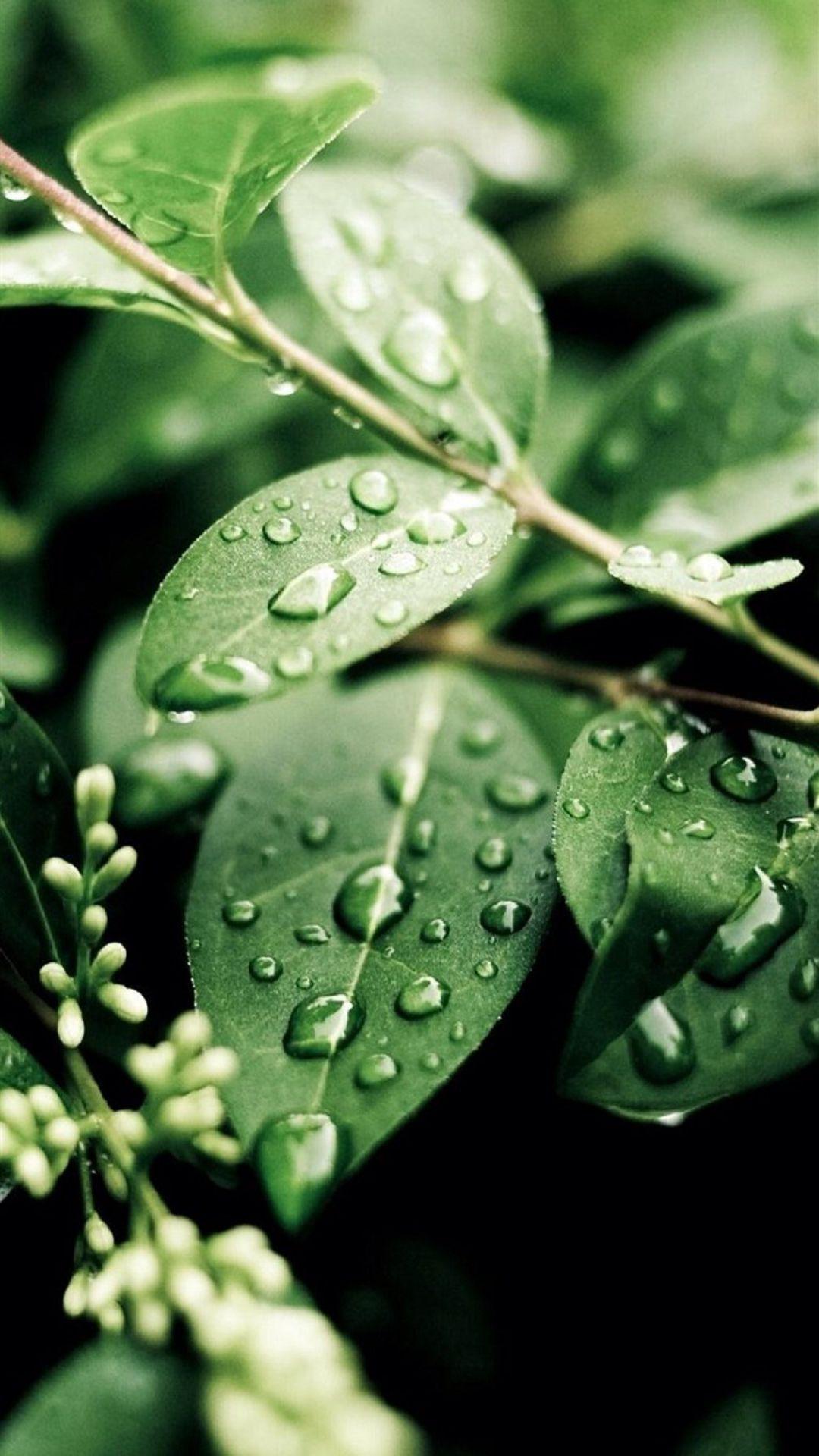 Macro Water On Green Leaves iPhone 6 plus Wallpaper