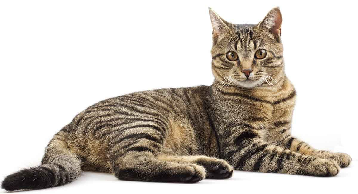 Tabby Cat Names Inspiration And Ideas For Naming Your Tabby