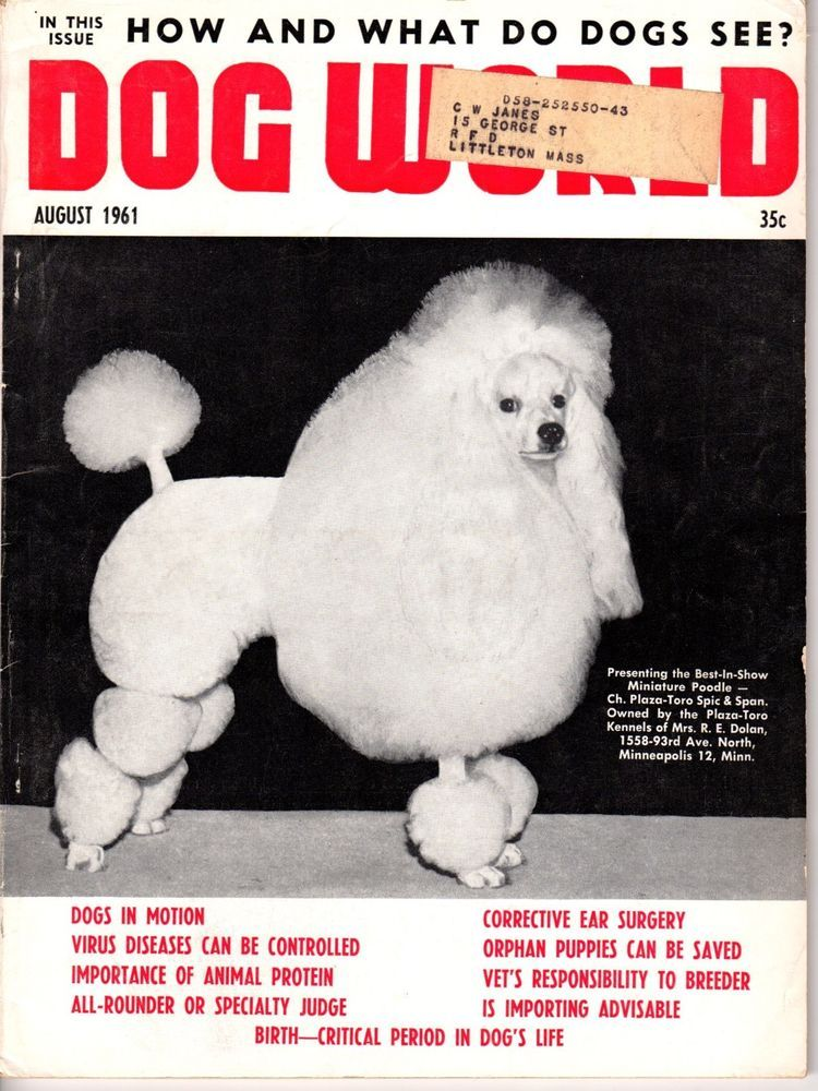 Vintage Dog World Magazine August 1961 Minature Poodle Cover