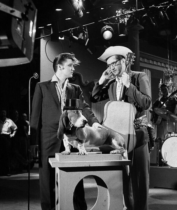 Elvis Steve Allen and The Basset Hound. Steve Allen and Elvis discuss in rehearsal how Elvis will sing his song Hound Dog to a basset hound on a pedestal wearing a top hat.... July 1 1956 http://ift.tt/2yLnsYW