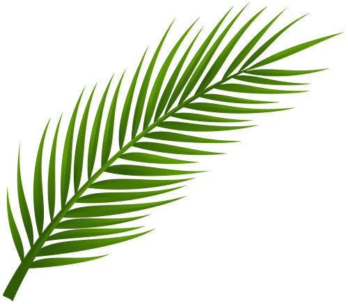 Palm Tree Leaf Png Clip Art Palm Tree Drawing Palm Frond Art Palm Tree Leaves 115,000+ vectors, stock photos & psd files. palm tree leaf png clip art palm tree
