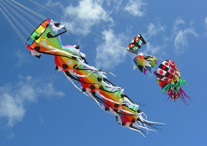 Rainbow Myriapod Line Laundry Windsock For Kites Designed By