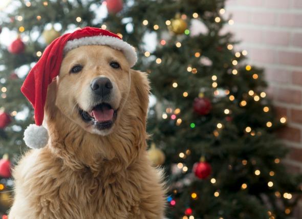 Epingle Par Dog Lover Community Sur Christmas Dog Journee Internationale Du Chien Vacances Chien Chien Noel