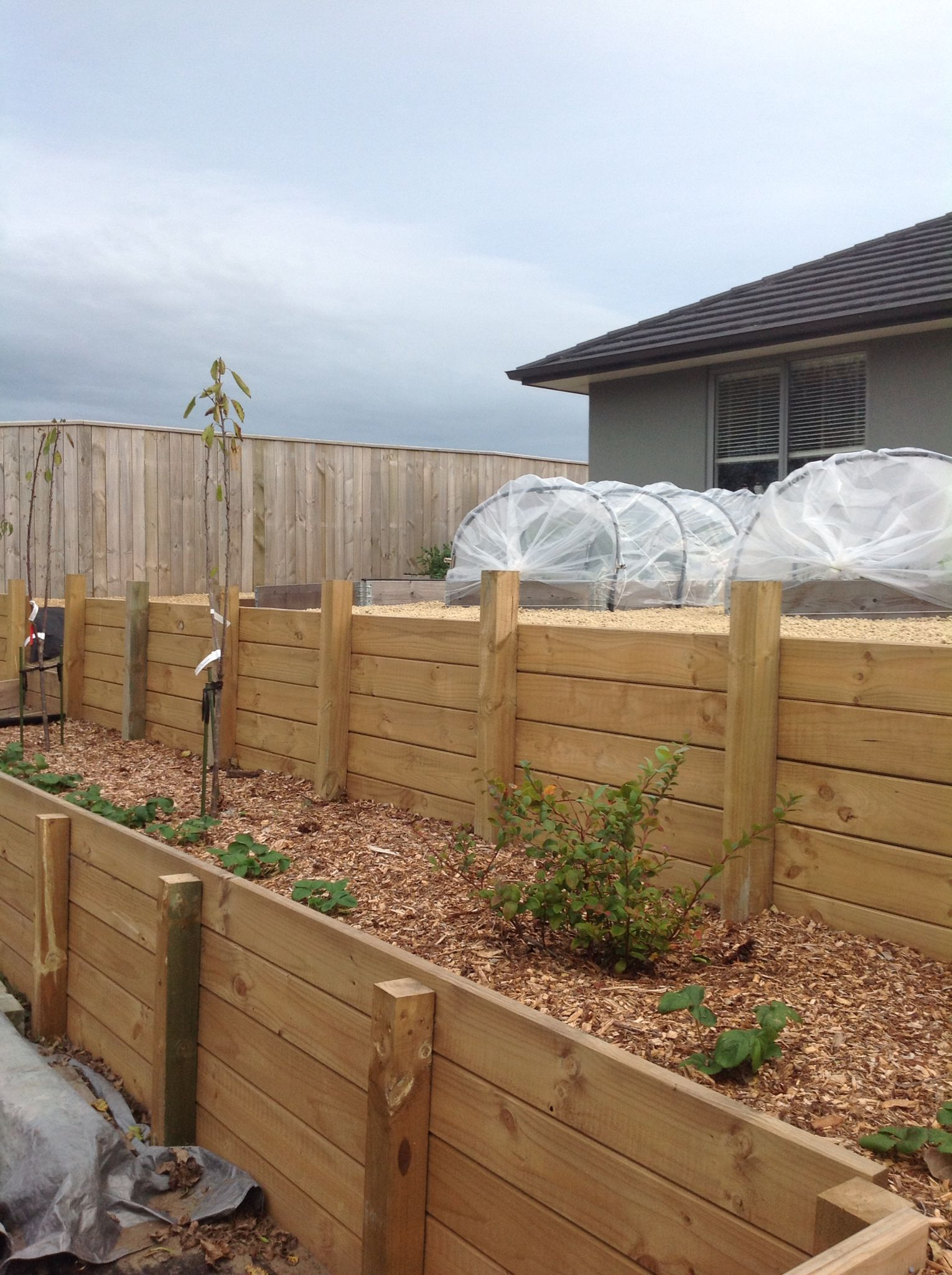 Garden bed with trees  Pin by Sabrina Breuker on Garden  Pinterest  Peach trees and Gardens
