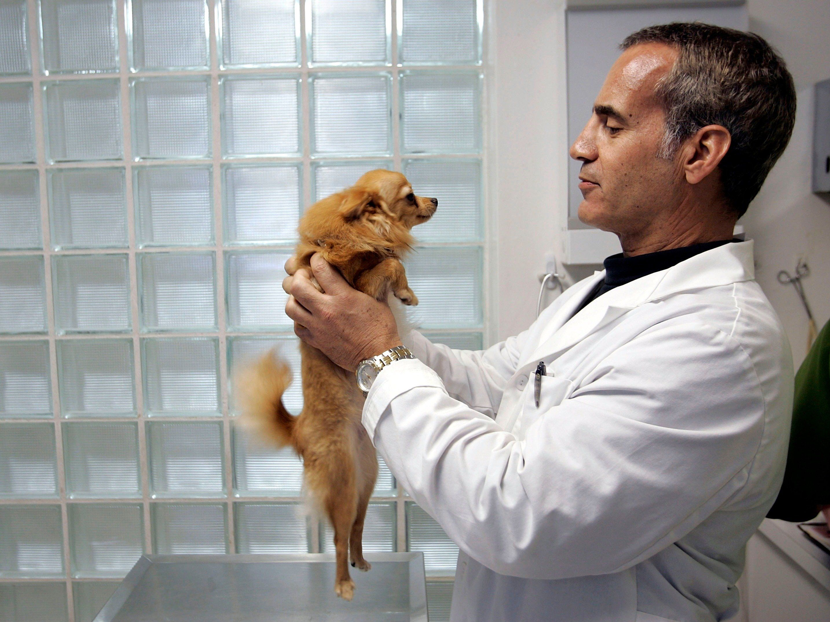 The 25 Highest Paying Jobs For People Who Don T Want To Sit At A Desk All Day Losing A Dog Vet Clinics Dog Breeds