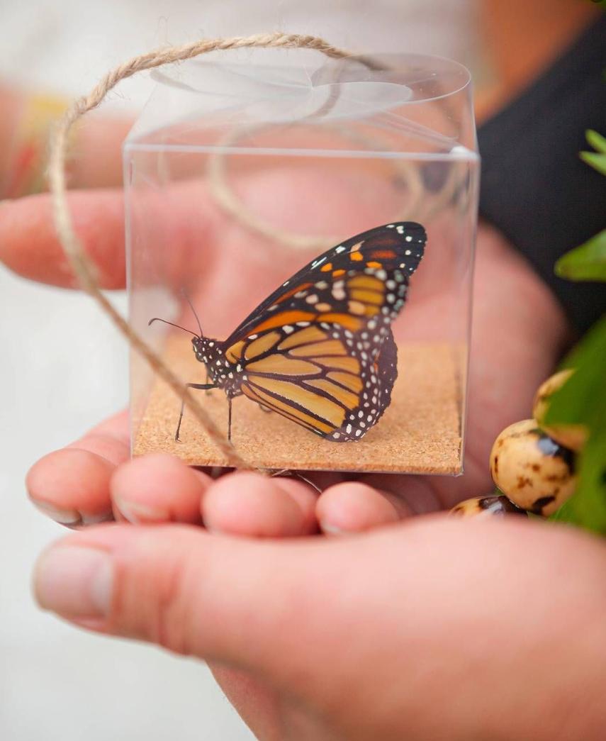 Monarch Butterflies Butterfly Release Wedding (2020