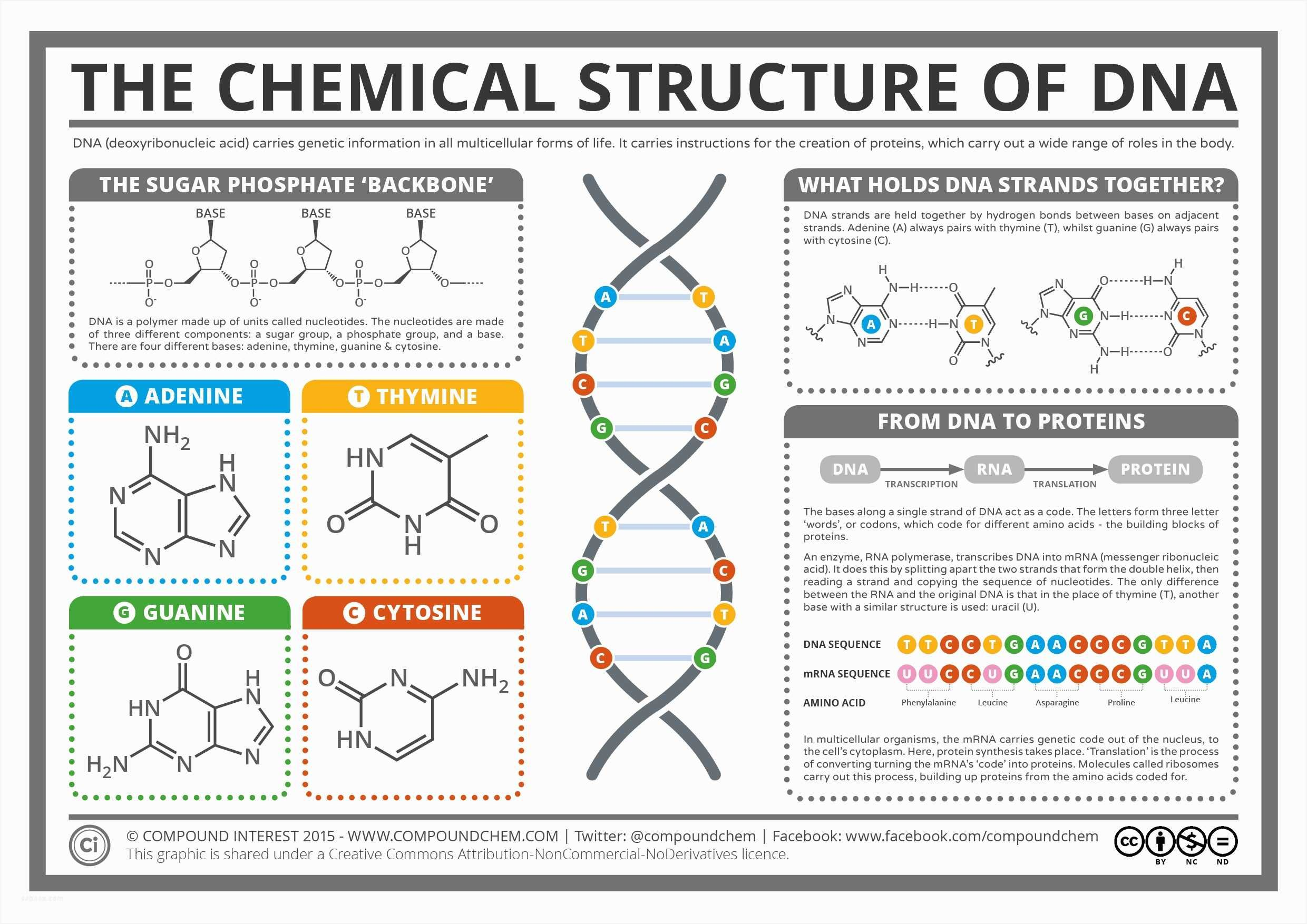 Dna Replication And Rna Transcription Worksheet Answers Or Dna Vs Rna Worksheet Image Collections Worksheet Fo In 2020 Chemical Structure Biochemistry Teaching Biology