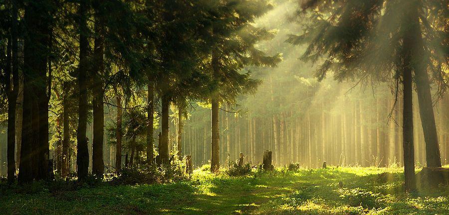 Wald result image