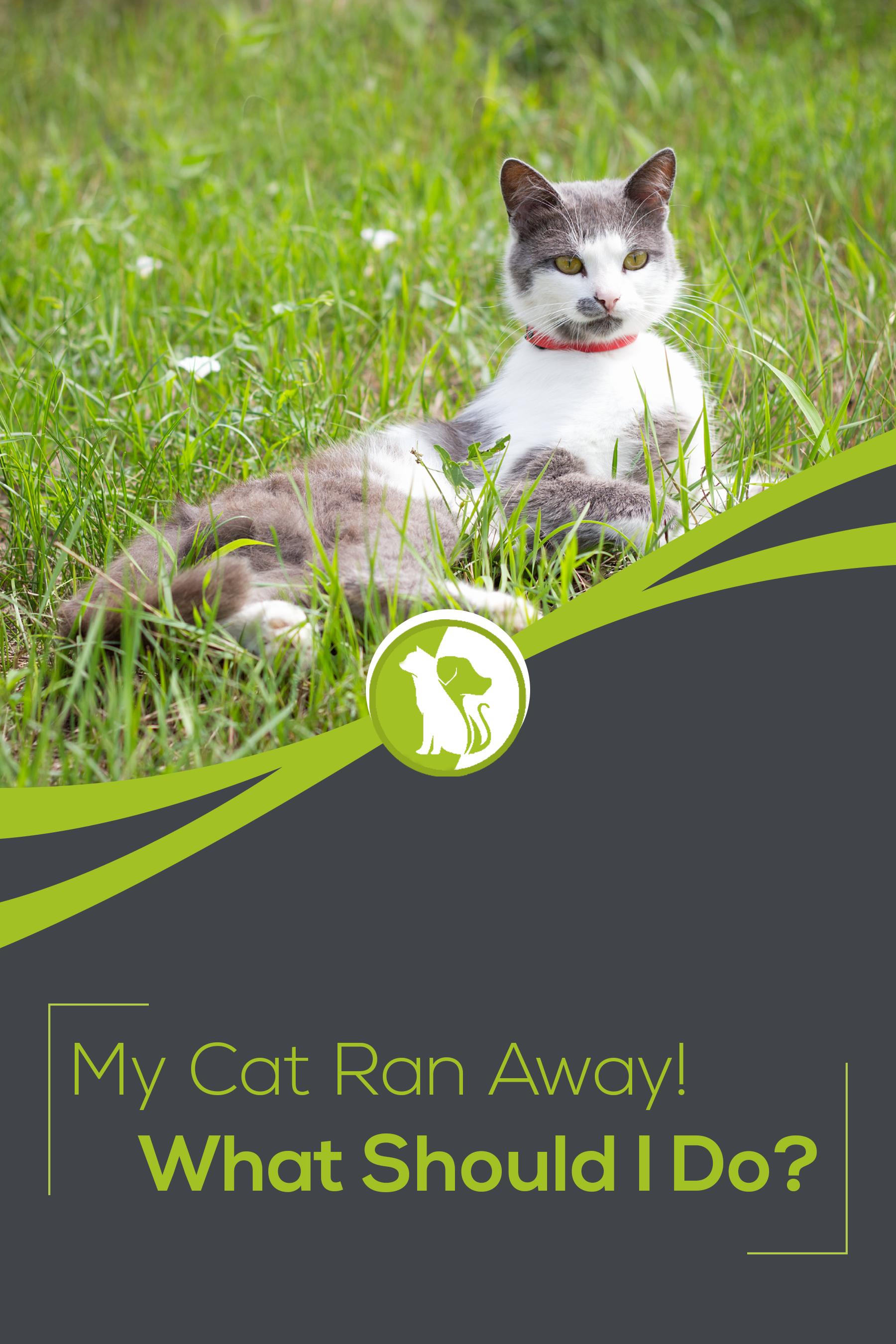 My Cat Ran Away What Should I Do In 2020 Cat Run Cats Running Away