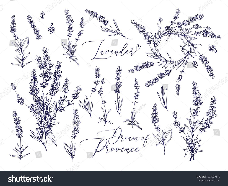 Black Line Lavender Vector Hand Drawn Tea Herb Illustration Set