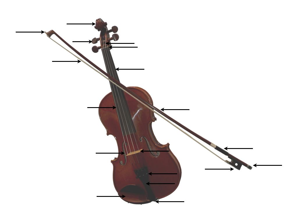 Parts Of The Violin Worksheet Middle School Music Classroom