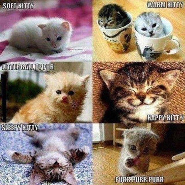 Soft kitty Warm kitty  Little ball of fur Happy kitty  Sleepy kitty Purr Purr Purr
