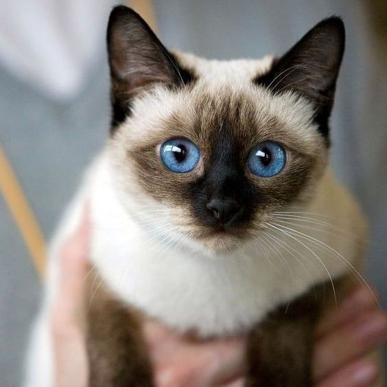 #kittensofinstagram #catlove #cutecat #animal #petstagram #catsofig #ilovemycat #kittycat #dog #catloversclub #instagood #dogsofinstagram #catsofinsta #catslover #blackcat #ilovecats #katze #catscatscats #chat #caturday #catsoftheworld #catsofworld #photooftheday #neko #catphoto #day #katzen #catsoftheday #gatosdeinstagram #nature
