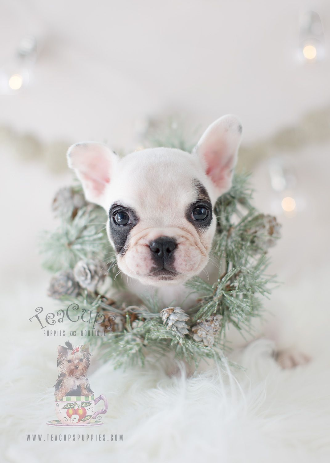 Christmas Puppy Adorable French Bulldog by TeaCupsPuppies
